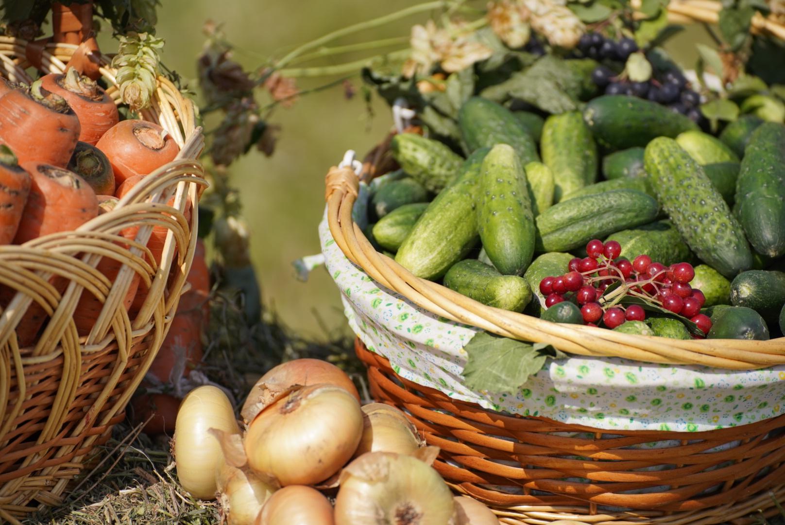 аграрии урожай овощи колхоз