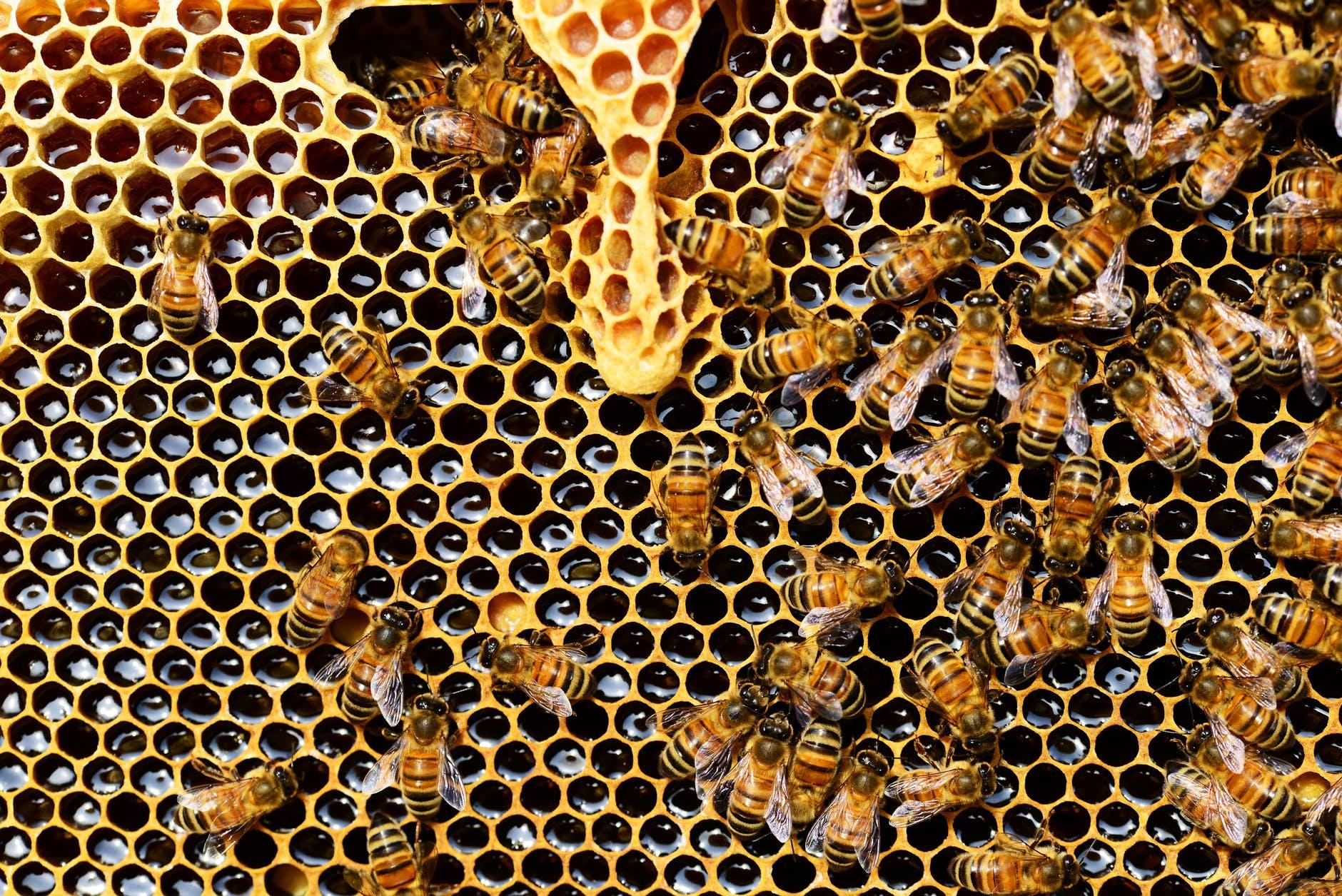 пчелы соты мед