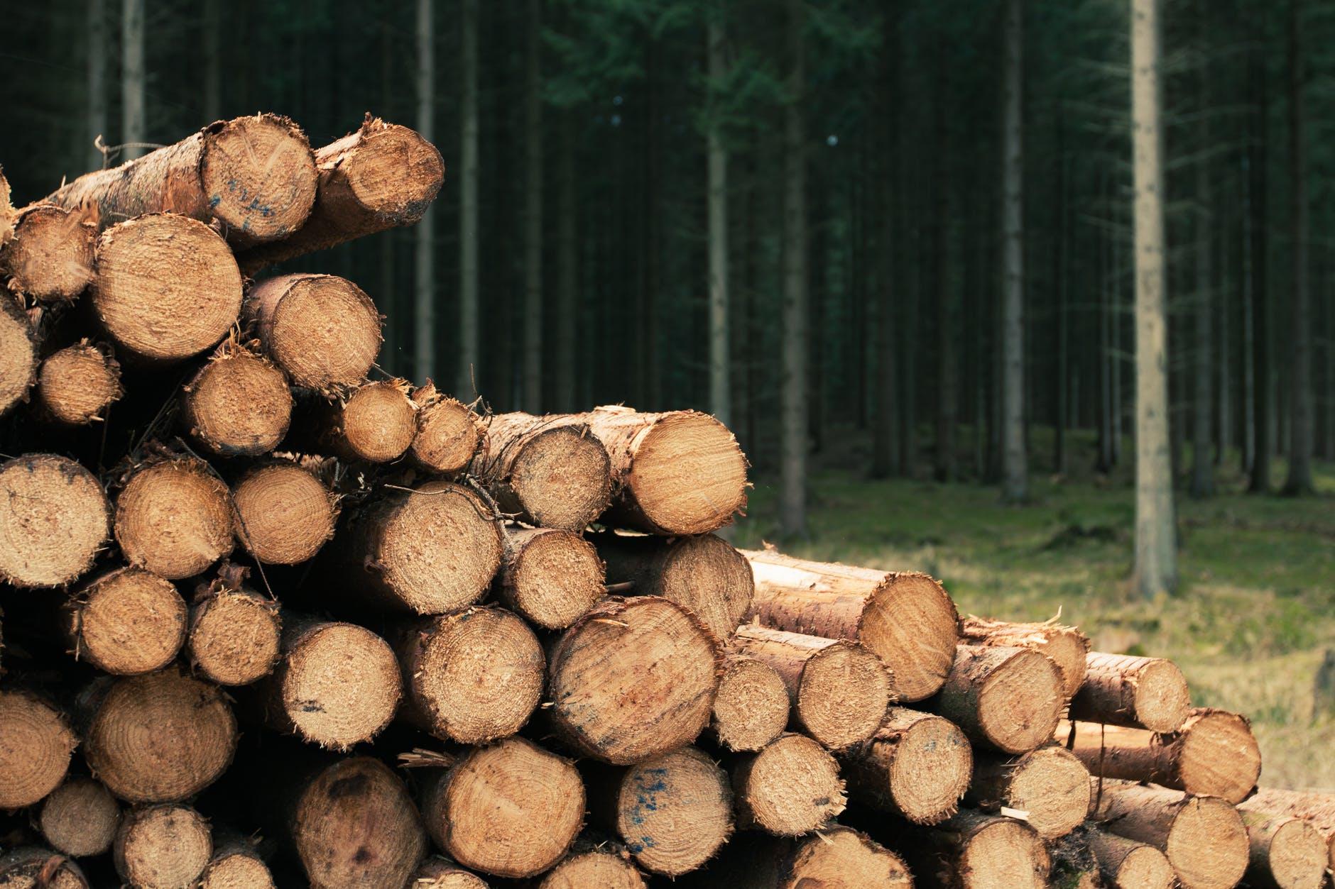 древесина бревна лес дерево