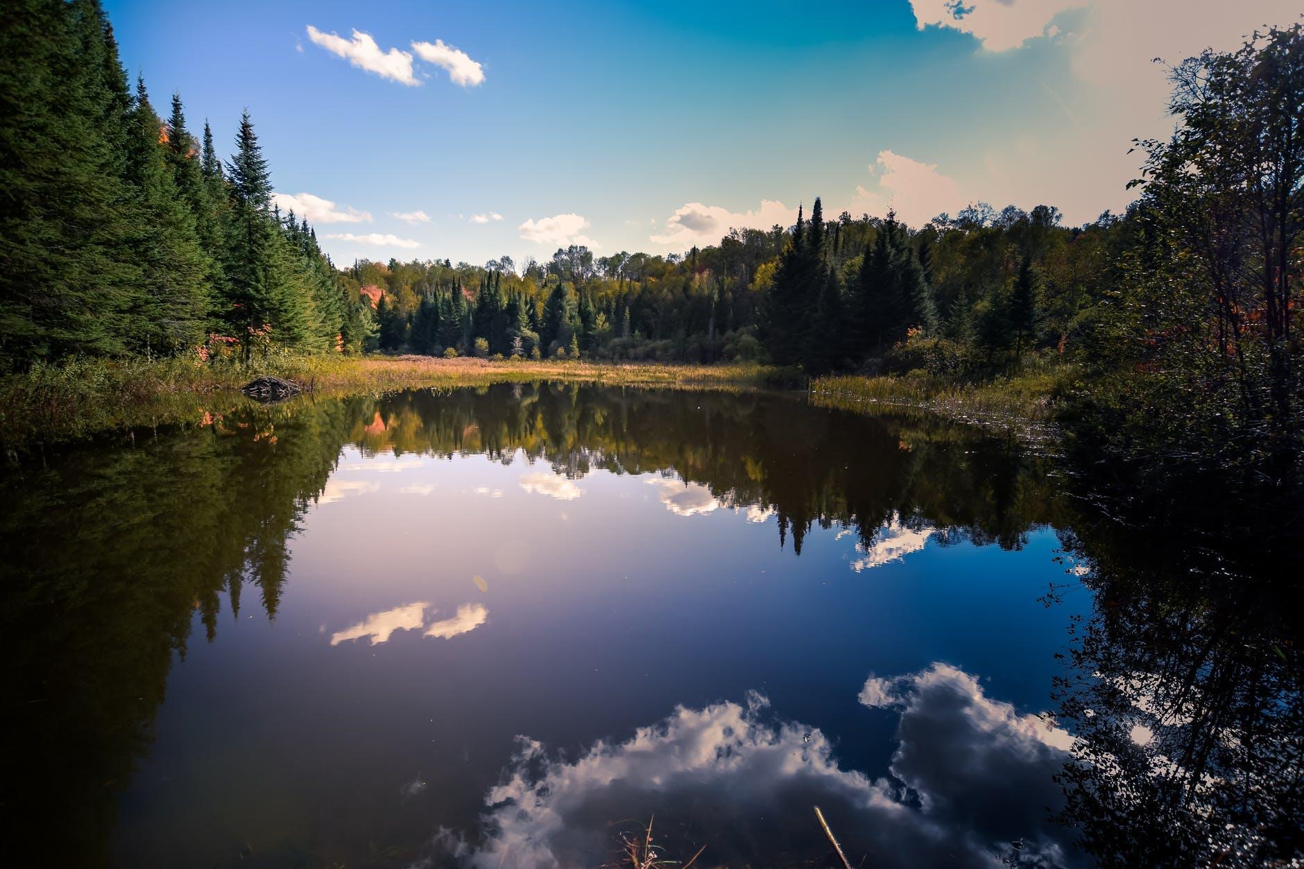озеро лес природа пейзаж